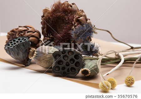 Decorative background of dried up plants 35670576