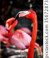 Pink flamingo portrait 35672873