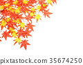 maple, yellow leafe, red leafe 35674250