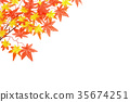 maple, yellow leafe, red leafe 35674251