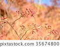 ฤดูใบไม้ร่วง,ไม้,โรงงาน 35674800