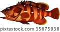 벡터, 물고기, 생선 35675938