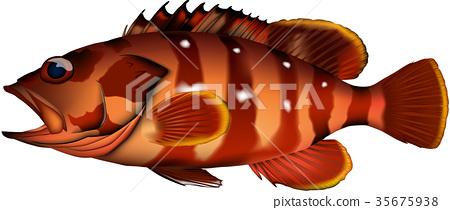 vector, vectors, fish 35675938