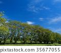 สวน,สวนสาธารณะ,ฤดูร้อน 35677055