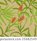 植物 姜 植物學 35682549