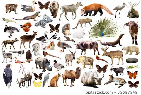 animal collection asia 35687548