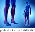 3D illustration of Fibula, medical concept. 35689963