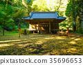 shrine, maple, yellow 35696653