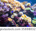Exotic saltwater fish swimming in a big aquarium 35698032