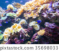 Exotic saltwater fish swimming in a big aquarium 35698033