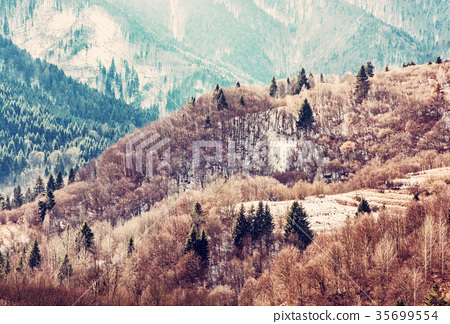 Forest in winter mountains, Slovakia, red filter 35699554