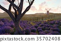 Lavender fields with a solitary tree 3d rendering 35702408