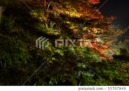 ต้นเมเปิล,ประภาคาร,ภาพถ่ายอาคารช่วงค่ำ 35707949