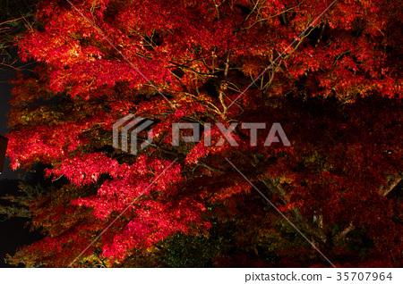 ต้นเมเปิล,ประภาคาร,ภาพถ่ายอาคารช่วงค่ำ 35707964