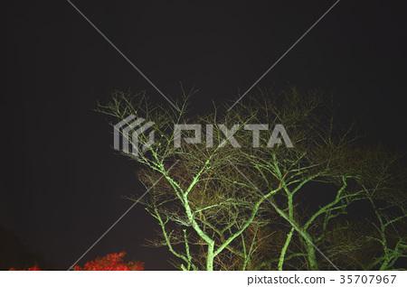 ต้นเมเปิล,ประภาคาร,ภาพถ่ายอาคารช่วงค่ำ 35707967
