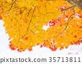 푸른, 잎, 맑은 하늘 35713811