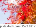 잎, 가을, 단풍 나무 35713812