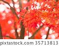 잎, 아름답다, 일본의 35713813