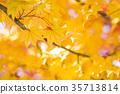 잎, 가을, 단풍 나무 35713814