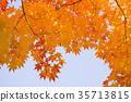 잎, 가을, 단풍 나무 35713815
