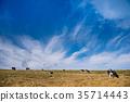 天空 草地 草原 35714443