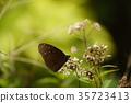莲花 莲藕 蜻蜓 35723413