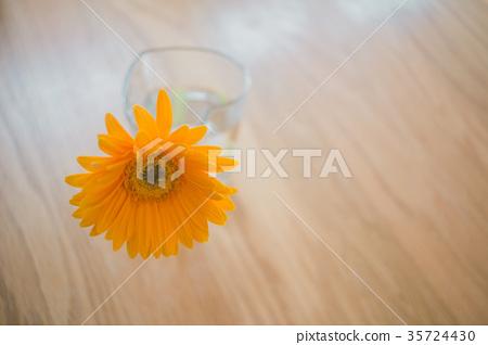 Gerbera Gerberas Vase For One Flower Stock Photo 35724430 Pixta