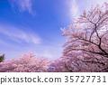 天空 樱花 樱桃树 35727731