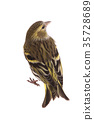 siskin, bird, birds 35728689