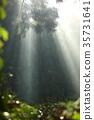 阳光穿过树林 过滤 光束 35731641