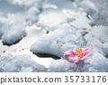 คาเมลเลีย,หิมะ,ฤดูหนาว 35733176