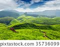 tea, plantations, green 35736099