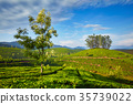 tea, plantations, India 35739022