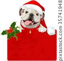 Christmas English bulldog 35741948
