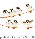麻雀 喙 小鳥 35746736