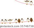 麻雀 喙 小鳥 35746738