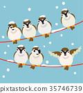 麻雀 喙 小鳥 35746739