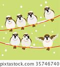 麻雀 喙 小鳥 35746740