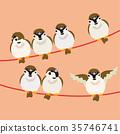 麻雀 喙 小鳥 35746741