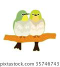 繡眼鳥 小鳥 鳥兒 35746743