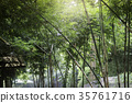 Bamboo forest in tropical weather Thailand 35761716