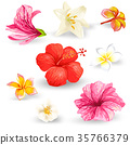 Set of vector illustrations of tropical hibiscus 35766379