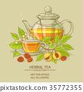 herb, nutmeg, vector 35772355