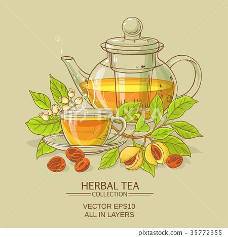 nutmeg tea illustration 35772355