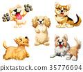 animal breed cartoon 35776694