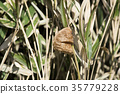 곤충, 벌레, 사마귀 35779228