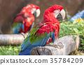 鳳頭鸚鵡 鸚鵡 長尾鸚鵡 35784209