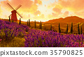 lavender, field, sunset 35790825