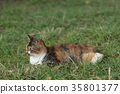 流浪貓 貓咪 貓 35801377