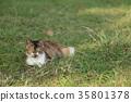 流浪貓 貓咪 貓 35801378